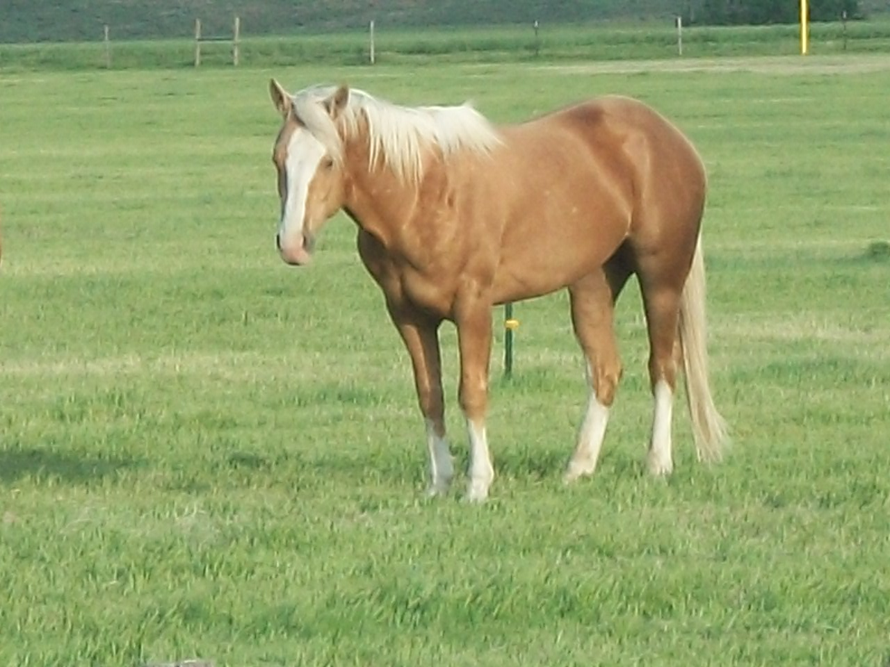 Quarter Horse Mares, Colts and Paint Mares and Colts | McDaniel's Wild ...