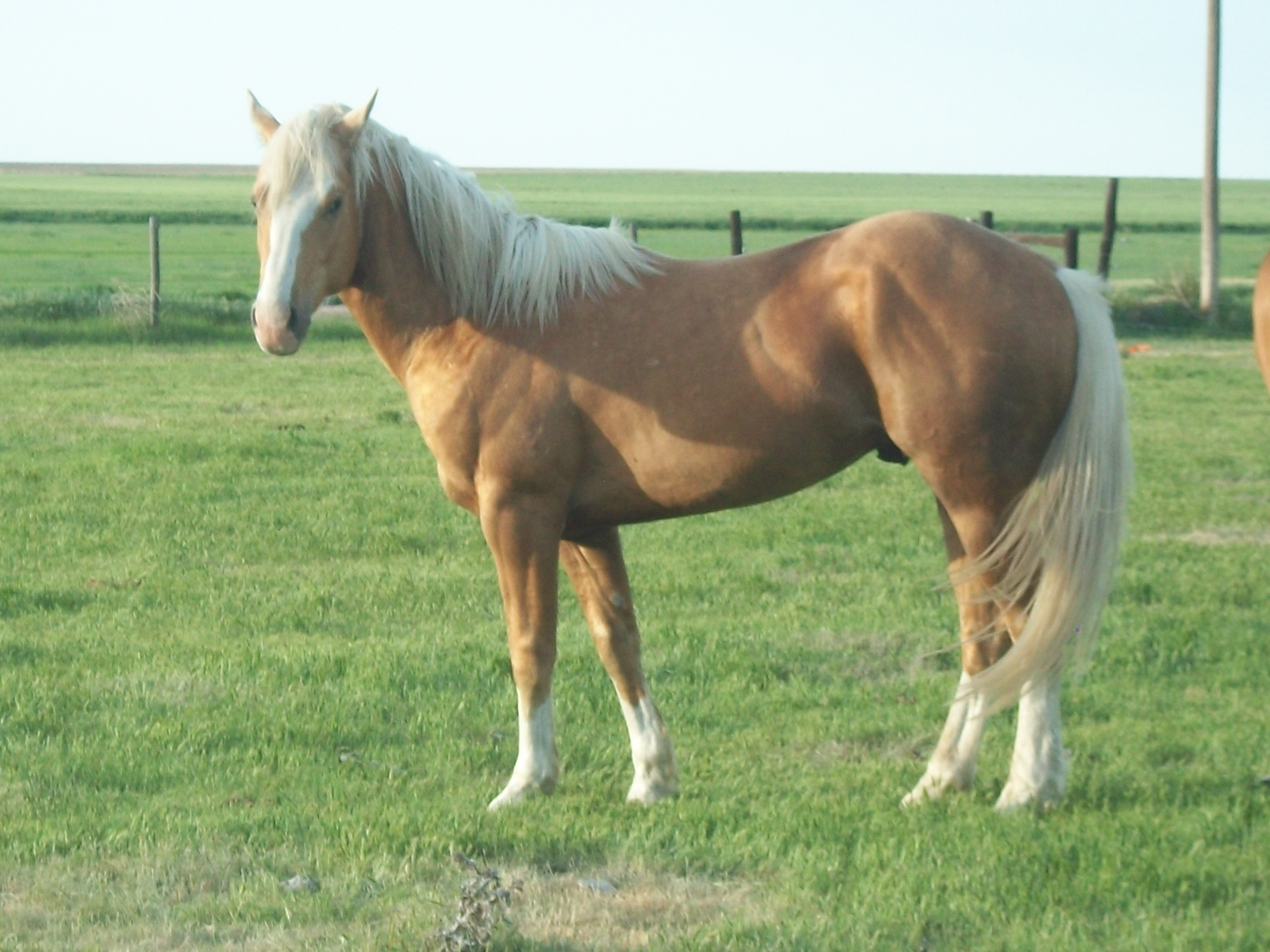Quarter Horse Mares Colts And Paint Mares And Colts